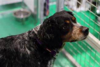 Crufts dag 2 en 3: the show must go on
