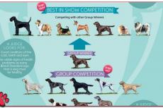 Crufts: extra controle voor Best of Breeds
