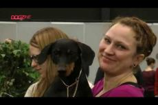 Embedded thumbnail for Dogshow Eindhoven 9 februari 2020