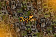 Embedded thumbnail for Dogzine TV: In gesprek met de boswachter (20 februari 2020)